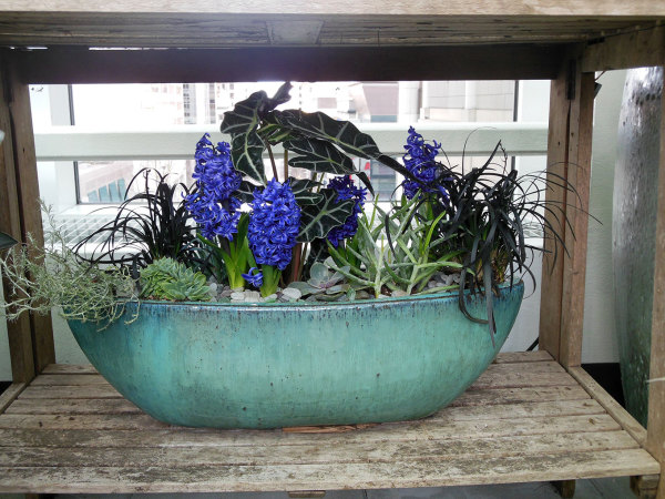 gardening potted plants