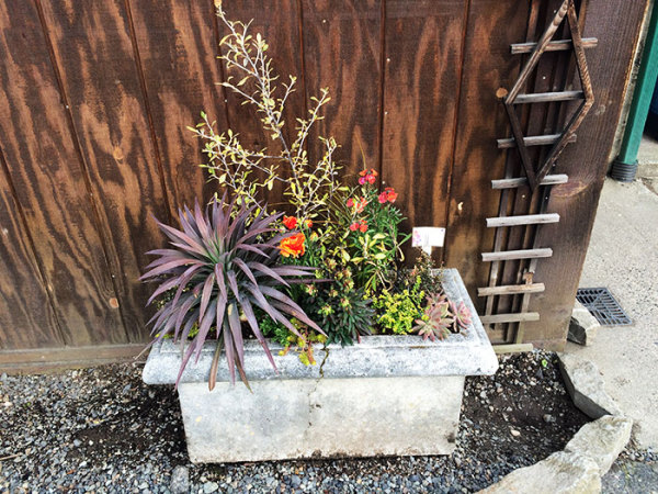 container gardening, gardening, rustic gardening