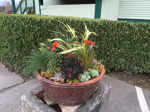 potted plant gardening