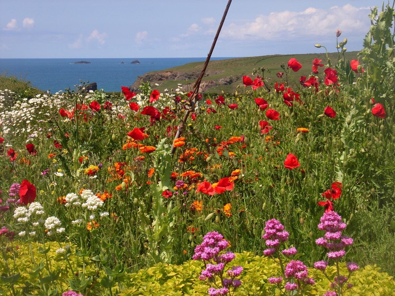 Wild flowers at Golden Burn Cottage Garden Portcothan