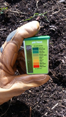 Checking soil pH