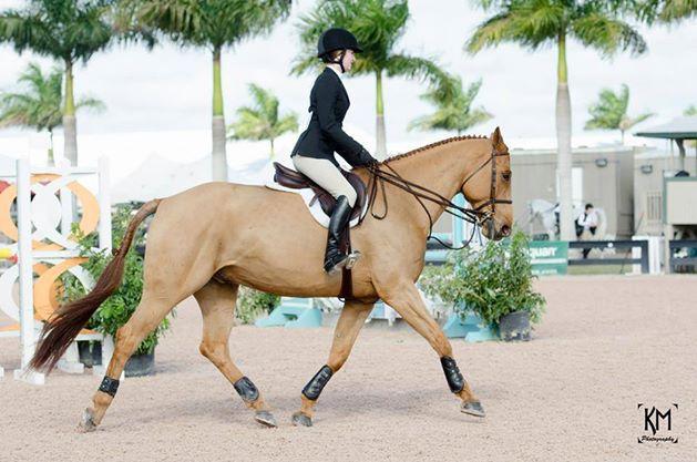 Horseback Riding Ohio
