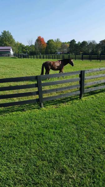 Horses are happy at Stealaway