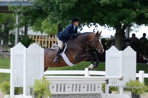 ohio show horse for sale