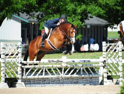 show horses for sale