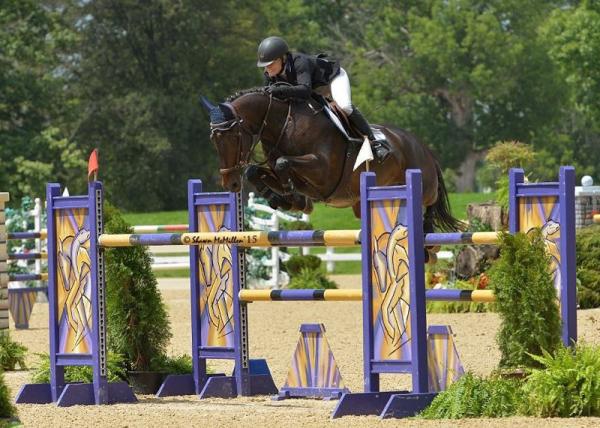 horse for sale ohio