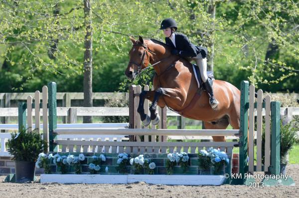 ohio horses for sale