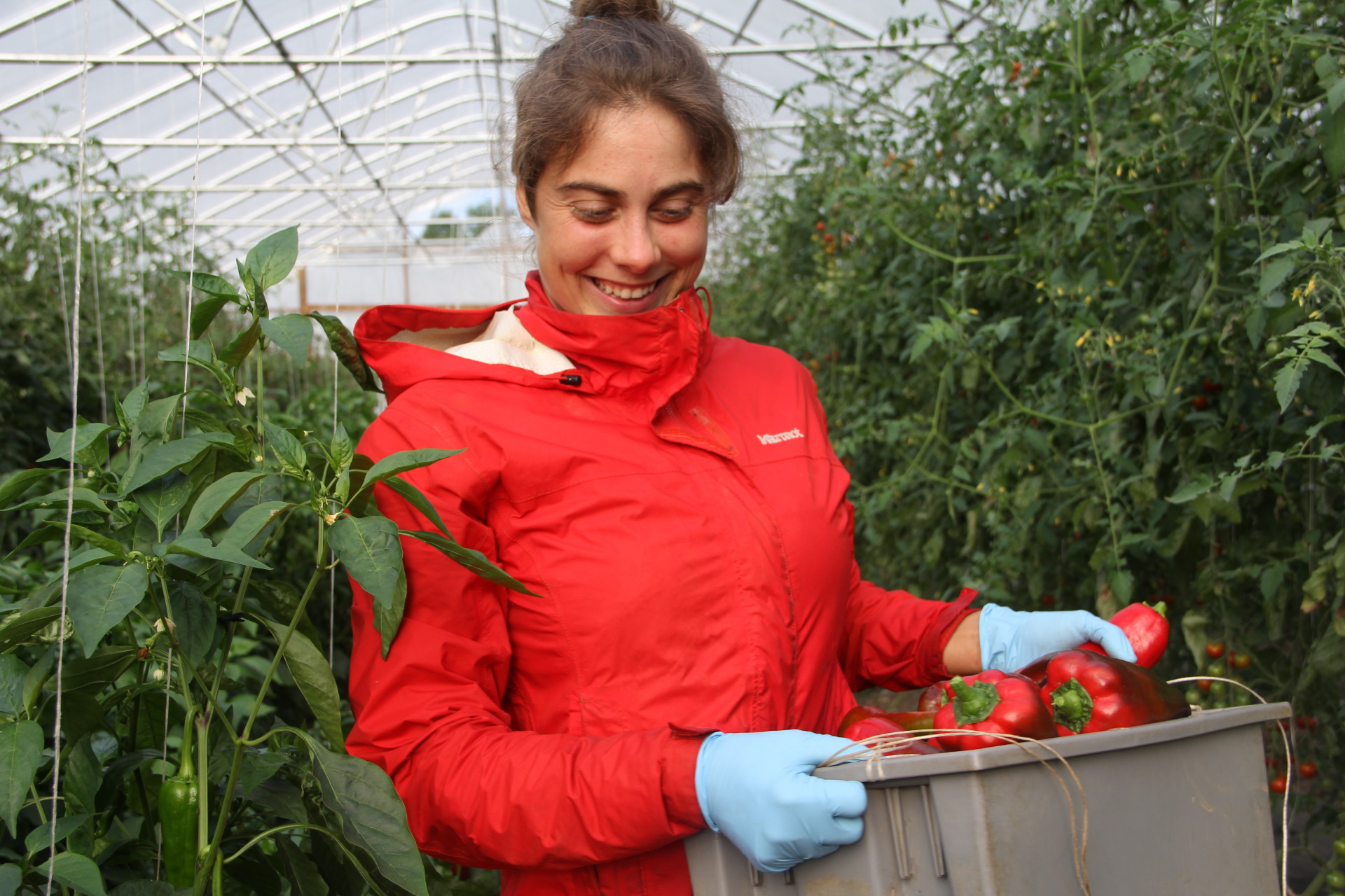 2015 Crew Leader, Emma harvests peppers from the hoop house