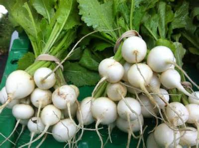 Fall Season CSA Week 4: Turnip Tips