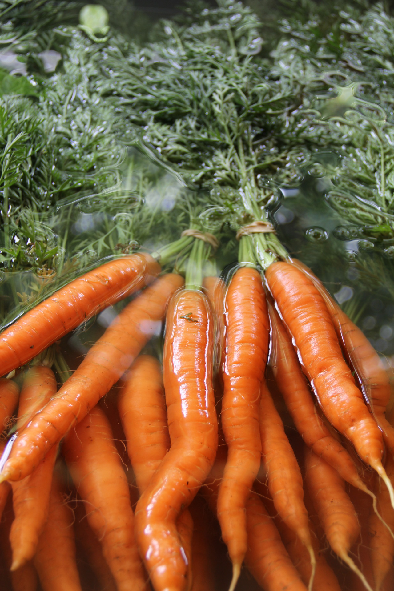 Spring Carrots