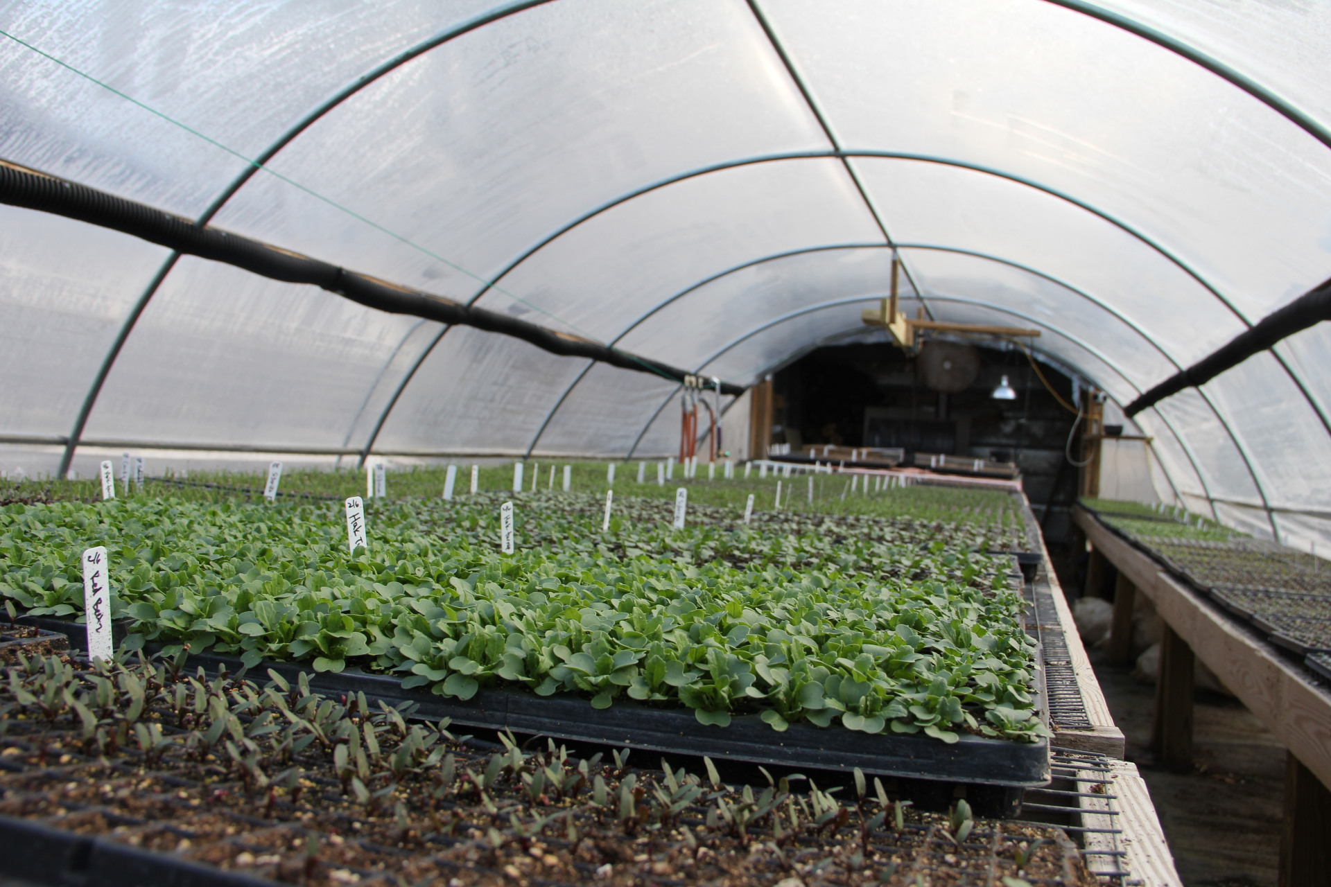 In our propogation house, we start most of our plants from seed