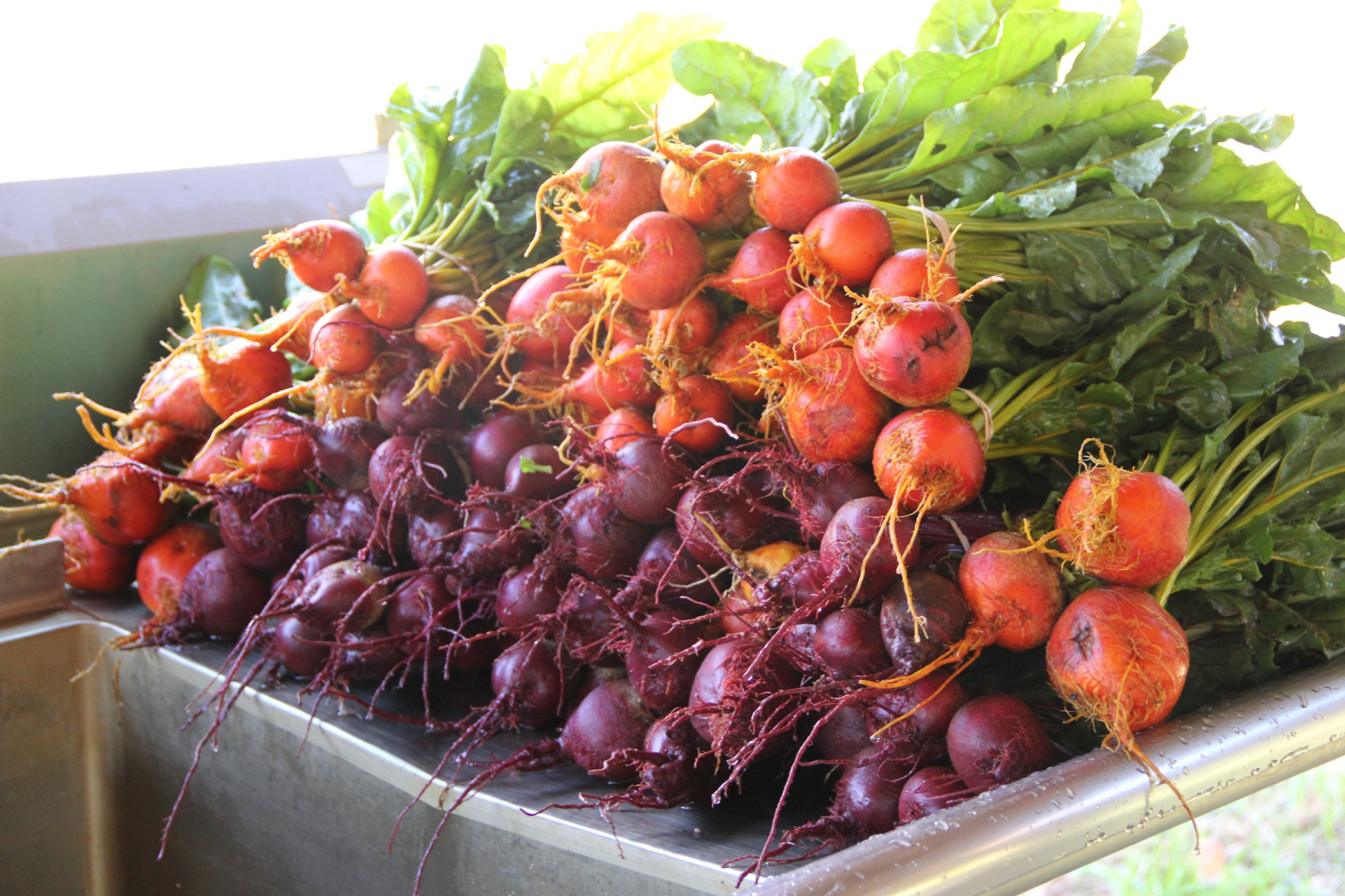 Red and Golden Beets YUM!!