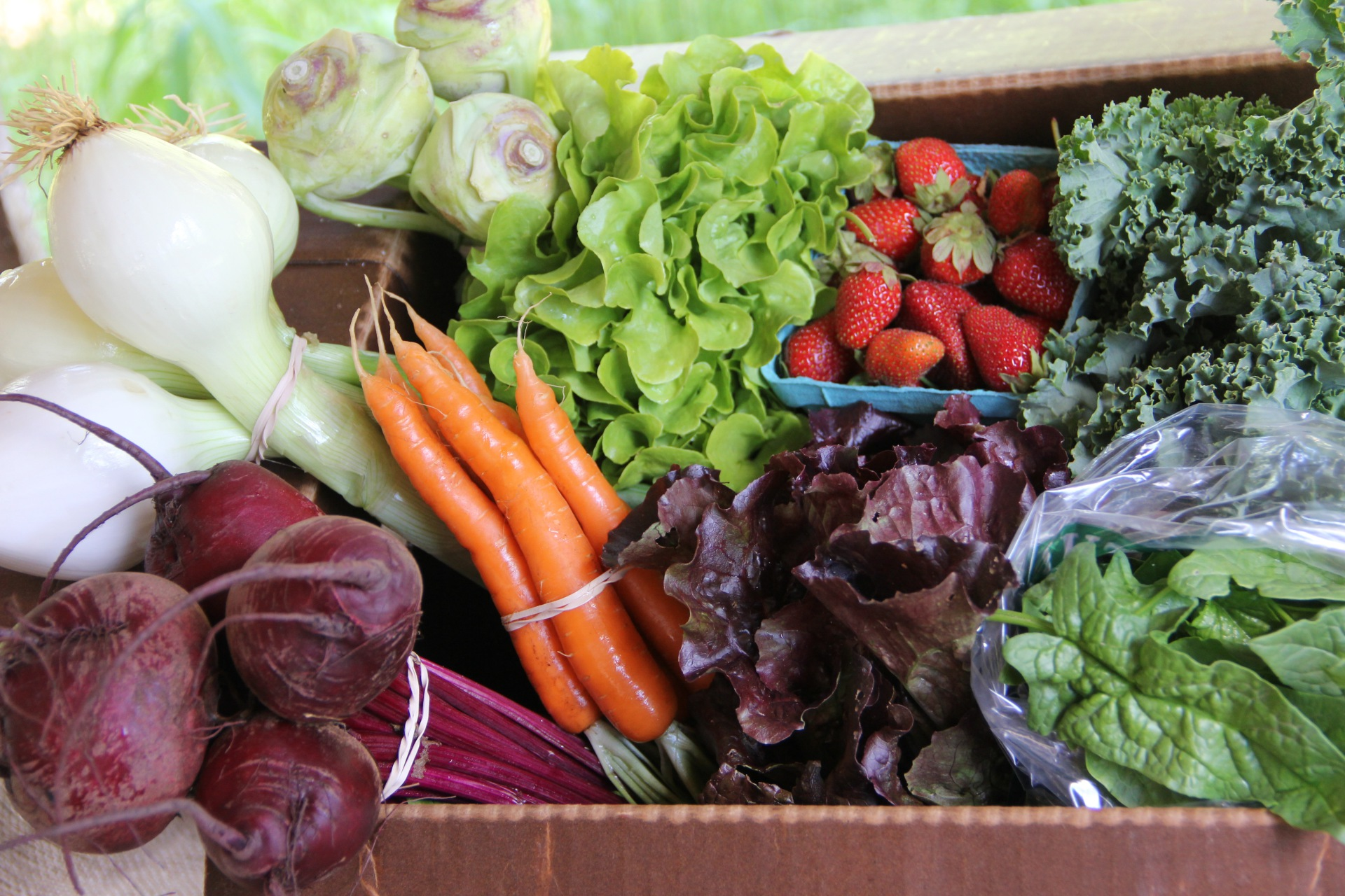 Example CSA Box in the Spring