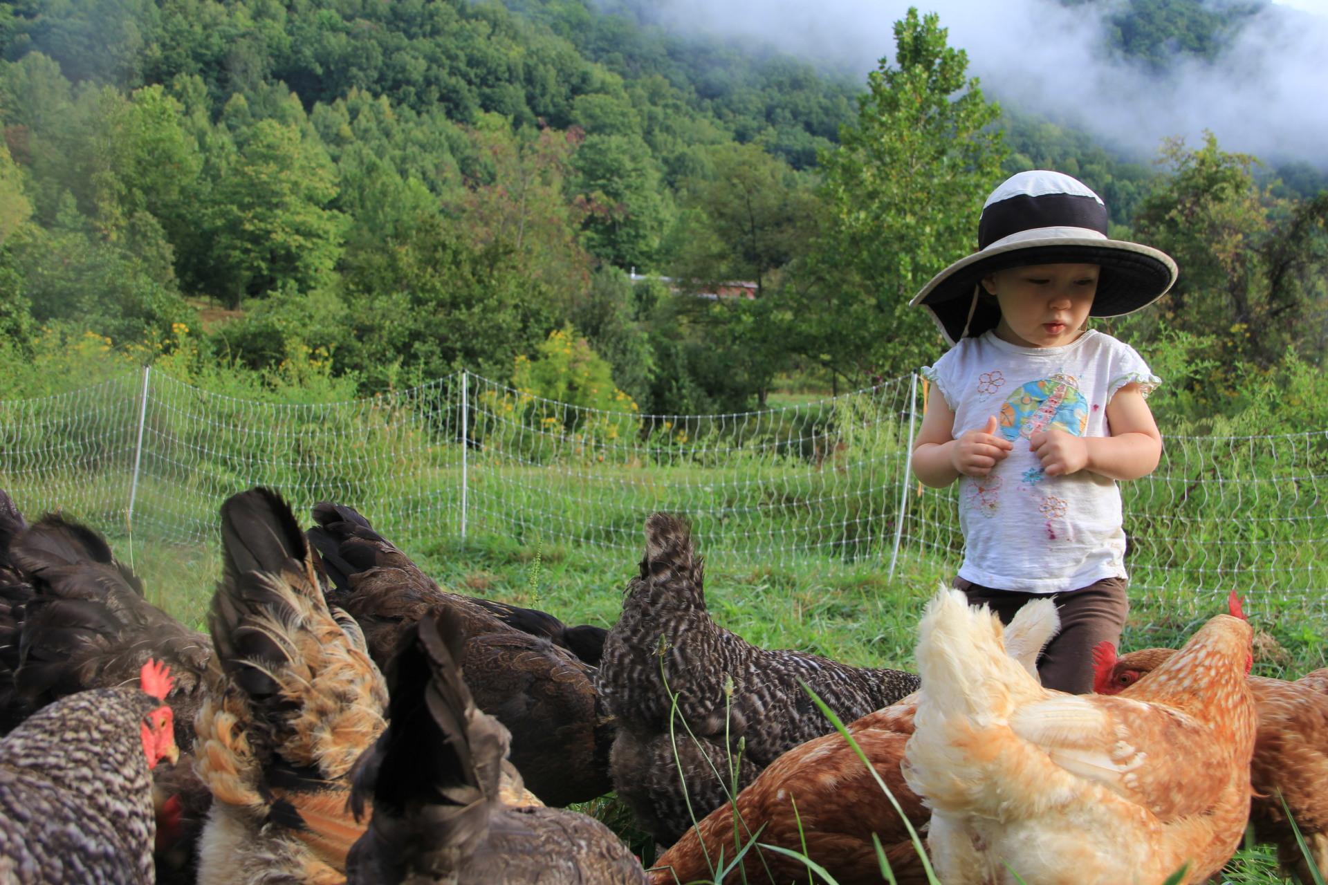 Leah Littman feeding the chickens