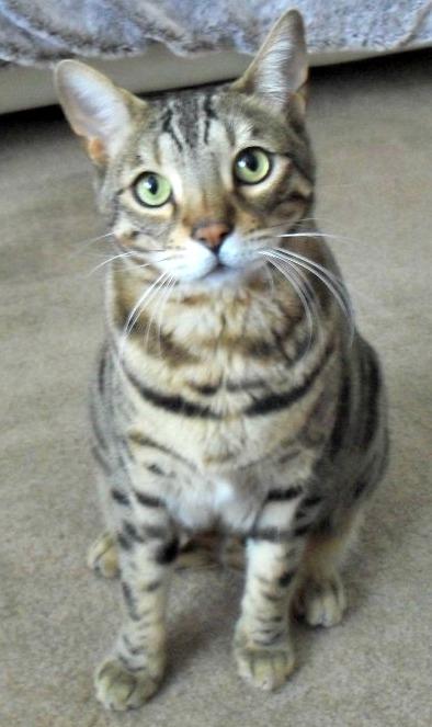 Kiko cat