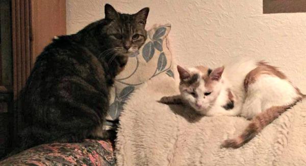 Sally & Daisy cats