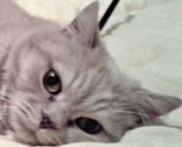 Zeusz cat