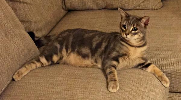 Kizzy cat