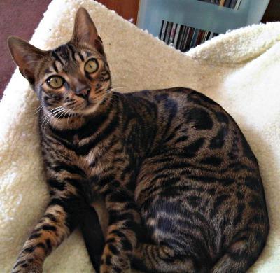Milo cat