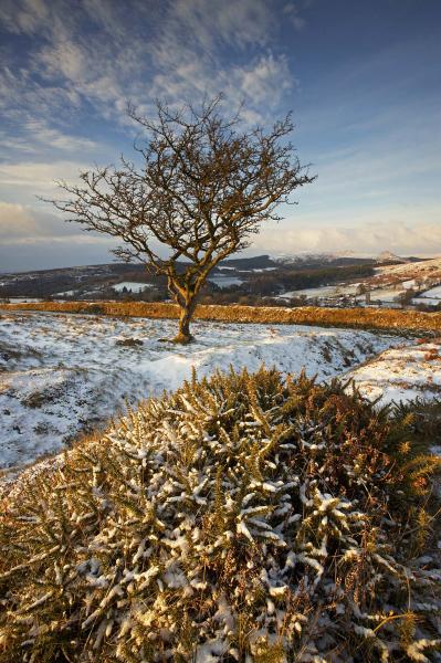 Sheepstor Tree, Dartmoor UK L114