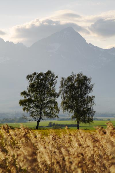 High Tatras, Slovakia T135