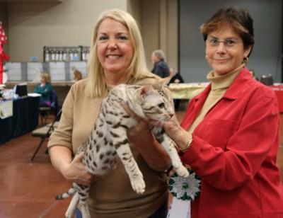 Phoenix Feline Cat Show