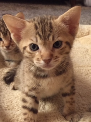 Kittens Available Now!