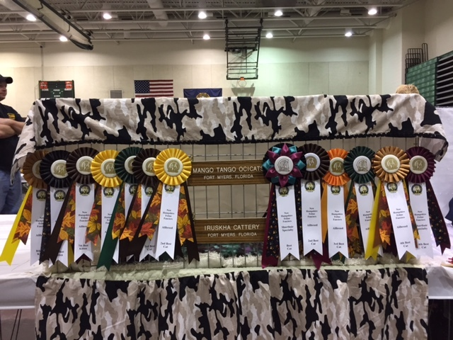 New Hampshire Cat Show