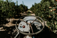 Tractor in Orchard