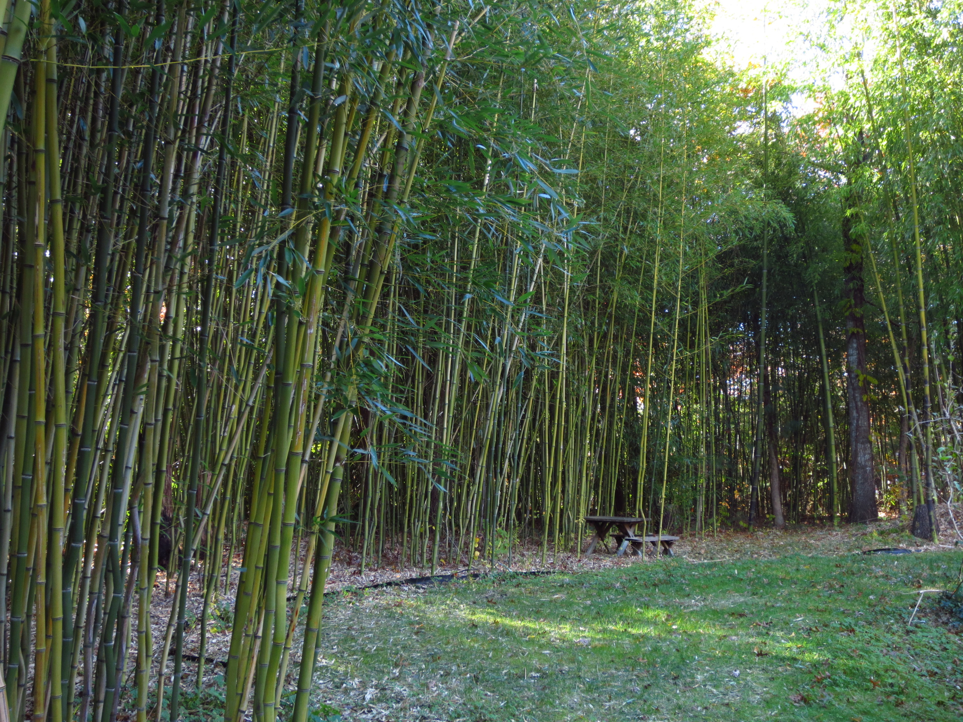 bamboo privacy