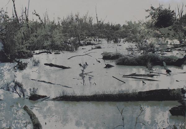 Dunes Swamp 2