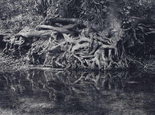 White River Roots 1