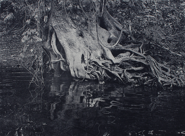 White River Roots 2