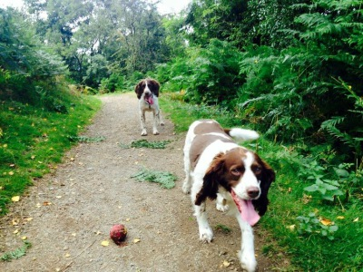 dog walker Droitwich