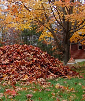 Mulch Your Leaves…Your Lawn Will Love It!