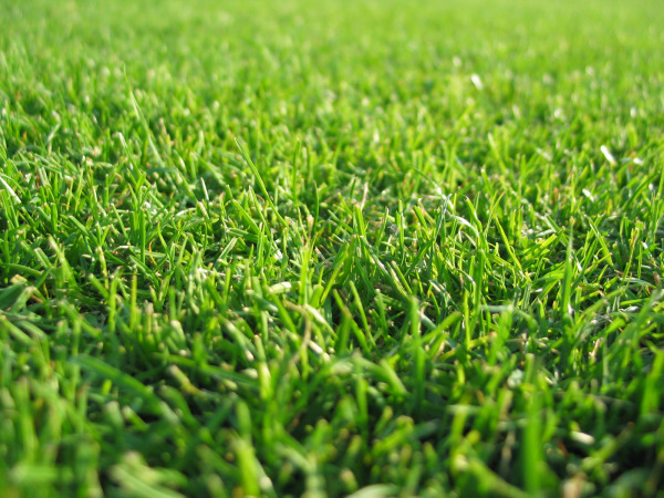 Choosing the Right Lawn Fertilizers for Fall & Winter