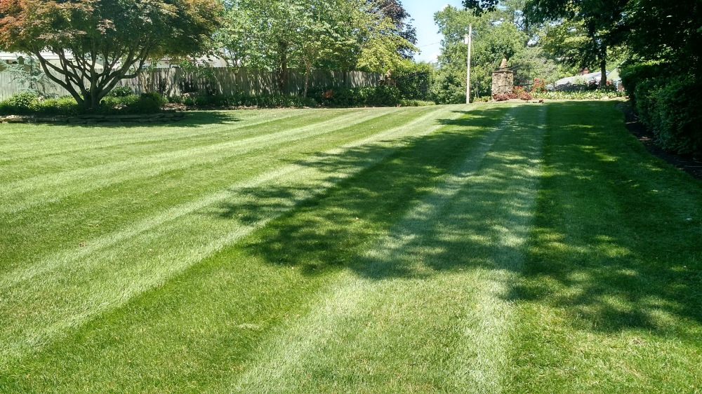 lawn, grass, striped lawn, residential,