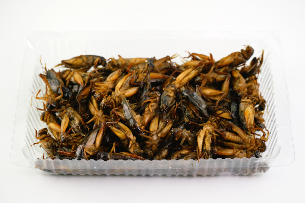 Fried cricket