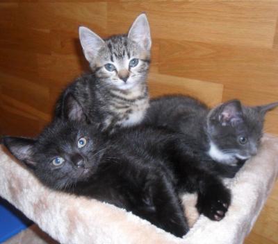 New Cat or Kitten