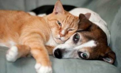 Introducing a new cat to your pet dog