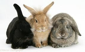 Introducing rabbits
