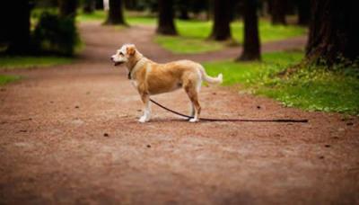 Lost dog advice