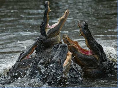 Why CEOs Get Stuck in the Alligator Pit