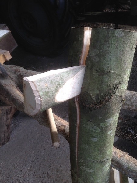 cleaving ash wood with a cleaving break and wedges