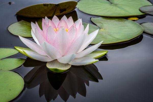 meditation, healing, spiritual