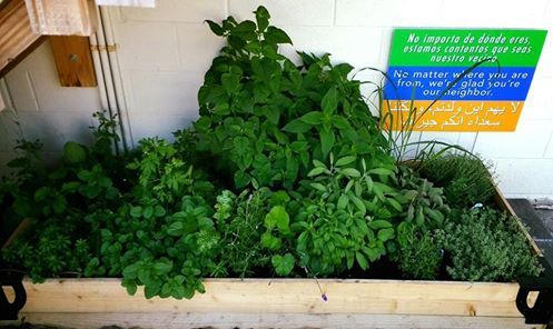 Welcome to the Yoga Shala Herb Garden