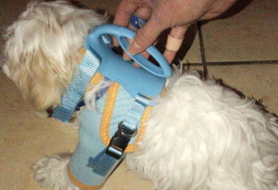 doggy care  harness