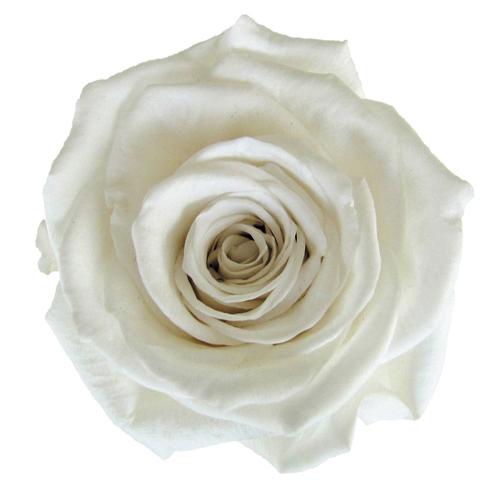 #1 Pearl white