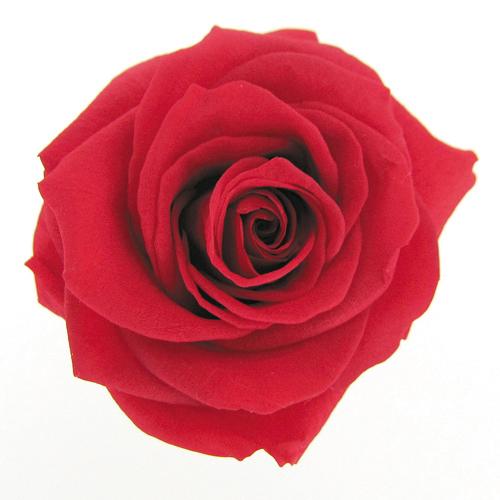 #5 Cherry Red