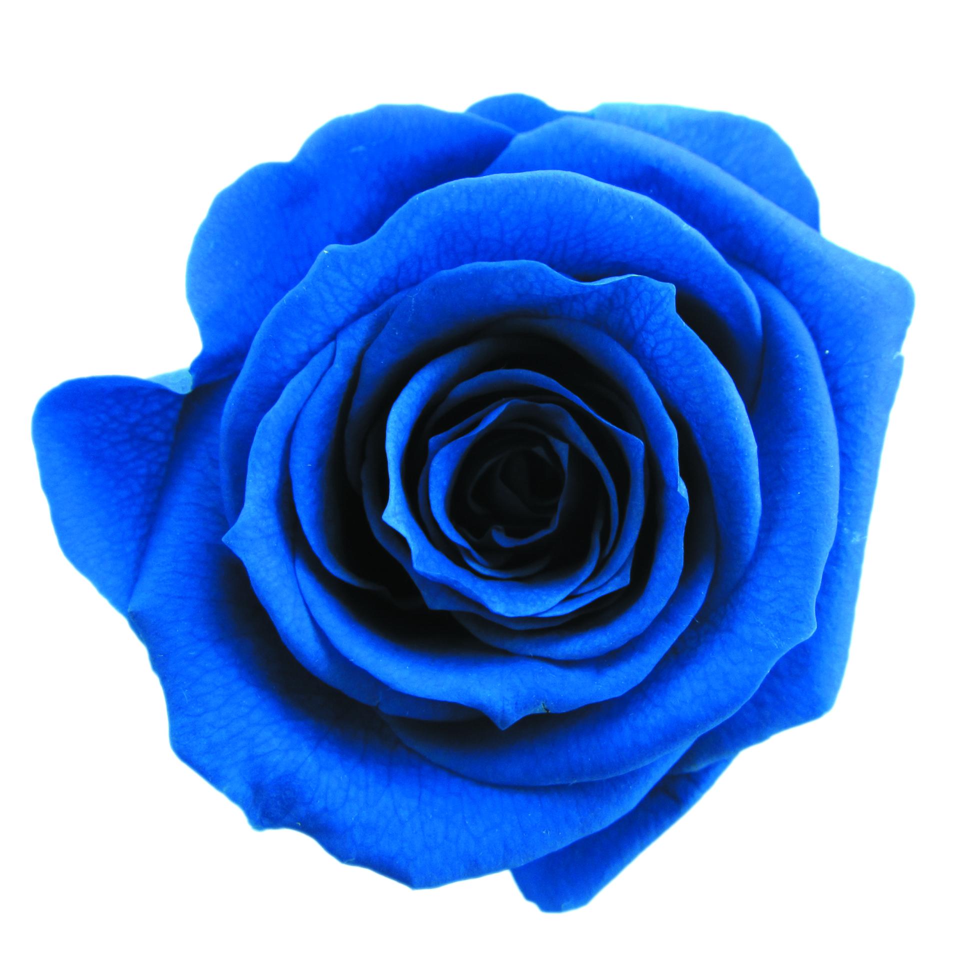 #12 Grand Blue